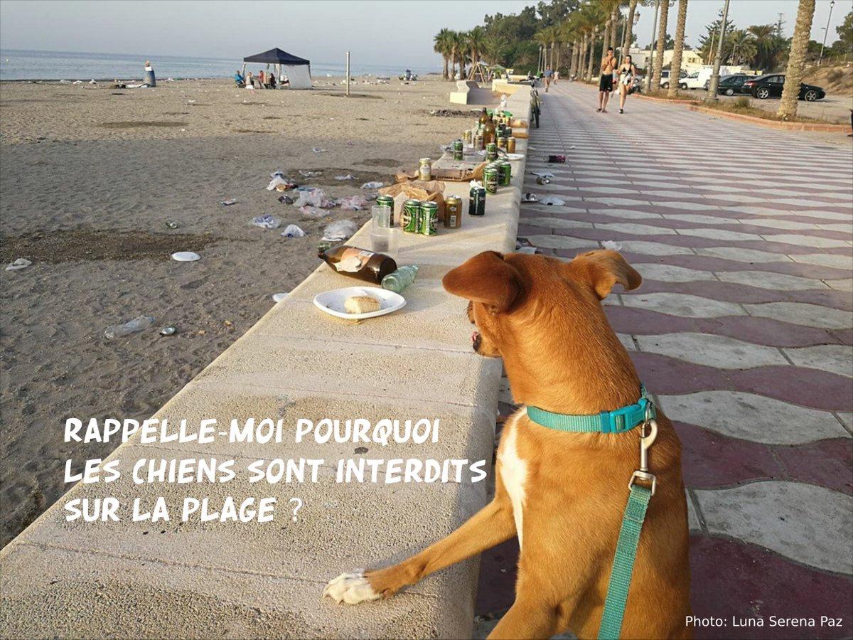 chien_plage