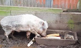 Affamés, ces animaux se mangent entre eux !