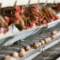 eriez-vous favorable à une interdiction de l'élevage en batterie des volailles françaises ?