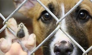 Plus de 60.000 chiens et chats en attente d'adoption : les refuges sont déjà saturés avant les vacances d'été !