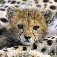 Il y a urgence : l'espèce animale est en grand danger !