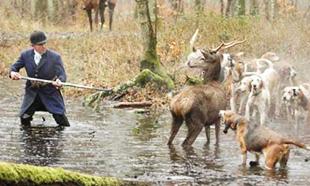 Non à la chasse à courre dans les Vosges