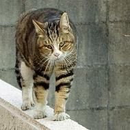 Pour encourager la stérilisation des chats