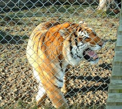 Lutte contre l'euthanasie des animaux au zoo du Chaudron !