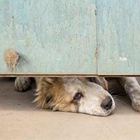 Refuge de Lens : un mouroir pour les animaux
