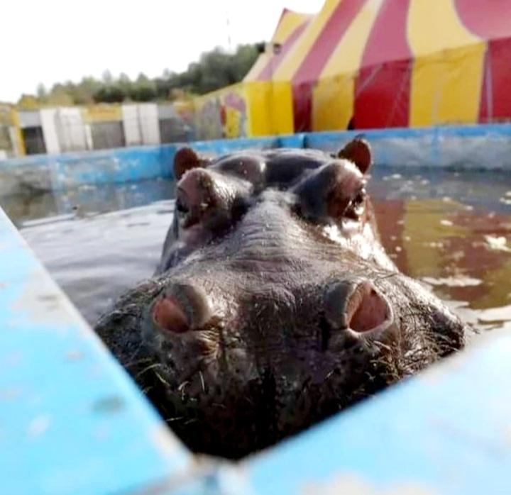 Nous ne voulons pas de cirques avec animaux sur notre territoire