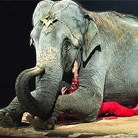 Non à la présence d'animaux dans un cirque à Longuenesse