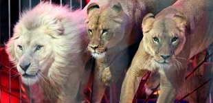 Non aux cirques d'animaux à Nice !
