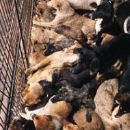 Boycott du commerce avec la Corée du Sud jusqu'à fin du martyr des chats et des chiens du pays