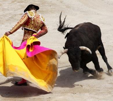 Basta Corrida : stop aux taureaux mis à mort !