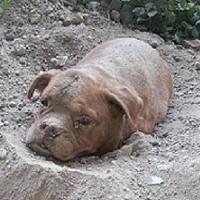 Peine maximale pour le maître de la Dogue de Bordeaux retrouvée enterrée vivante !