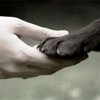 Pour une vrai déclaration des droits des animaux
