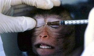 Pour l'abandon du projet d'animalerie à des fins de recherche médicale au pôle santé de Nancy Brabois.