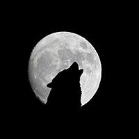 Êtes-vous capable de vous mobiliser pour arrêter tous les abattages des loups en France ?