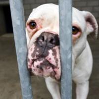 Condamnons les auteurs de cruautés envers les animaux