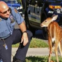 Pour la création en Belgique d'une brigade de police attachée à la protection animale