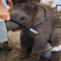 Stoppons la venue de ces cirques sans animaux ! Agissons contre ces maltraitances itinérantes.