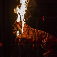 Êtes-vous pour ou contre les cirques avec animaux sauvages ?