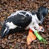 Contre le projet d'usine à déchets dangereux IndaChlor, des espèces menacées à Dunkerque !