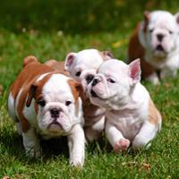 Aménagement d'un parc canin