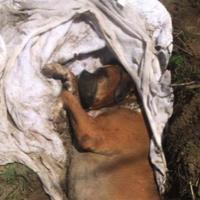 Justice pour le pauvre chien enterré vivant