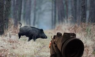 Êtes-vous surpris par la réaction des chasseurs suite à l'annonce d'une battue au sanglier géante ?