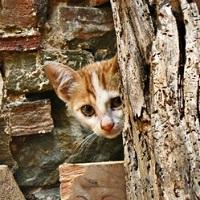 Pour une campagne de stérilisation des chats à Echenoz-la-Méline