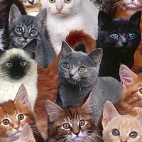 Contre le meurtre envisagé de millions de chats en Australie !