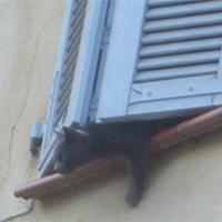 Sauvons 2 chats abandonnés et enfermés sur une fenêtre depuis 3 semaines !