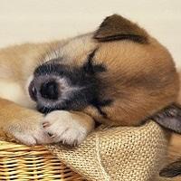 Stop au carnage des chiens et chats en Chine et au Vietnam !
