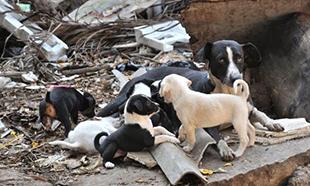 Pour le sauvetage d'une vingtaine de chiens !