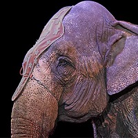 Bien-être animal : Non aux cirques avec animaux !