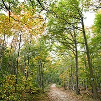 Pour garder les forêts publiques, publiques !
