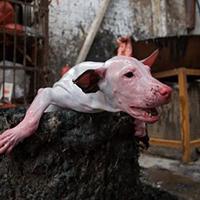 Tous unis pour chaîne mondiale contre le génocide animal !