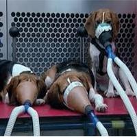 L'arrêt des expérimentations sur des chiens !