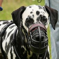 Contre le port obligatoire de muselière pour les chiens innocents !