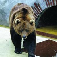 Sauvons l'ours de Saint-Lary-Soulan !