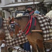 Stop aux calèches tirées par des chevaux-esclaves à Megève (Haute-Savoie) !