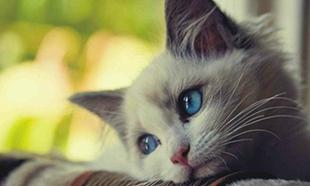 Justice pour un chat torturé a Draguignan en plein centre ville qui a succombé à ses blessures
