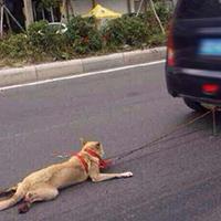 Homme ivre tue son chien en l'accrochant au capot de sa voiture
