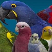 Non à la taille des plumes de tout oiseaux