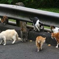 Stérilisation des chats errants à Montélimar