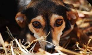 450 chats et 70 chiens, dans le Var, en danger par arrêt arbitraire de subvention