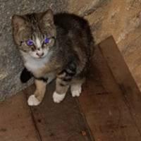 Aidons les chats errants du Mont-Saint-Michel (dép. 50) !