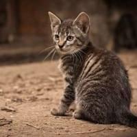 Pour ou contre la stérilisation obligatoire des chats dès 6 mois ?