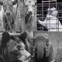Cause animale : selon-vous, quelle est la mobilisation prioritaire ?