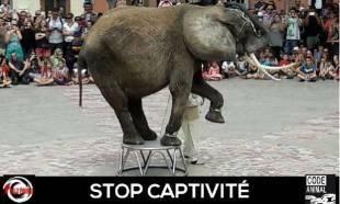 Non au spectacle de l'Éléphante Baby à la Fête Antique de Elne
