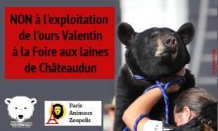 Contre l'exploitation de l'ours Valentin à la Foire aux Laines