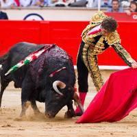 Arrêtez de promouvoir la barbarie des corridas : vous devez écouter la majorité