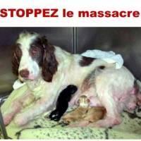 Pour interdire la vente de chiots, chatons et NACs en animalerie